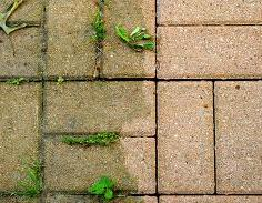 Advantages and Disadvantages of Block Paving - Weeds and moss on a block paving driveway